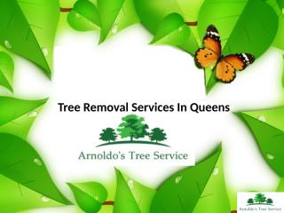 Tree Removal Services In Queens.pptx